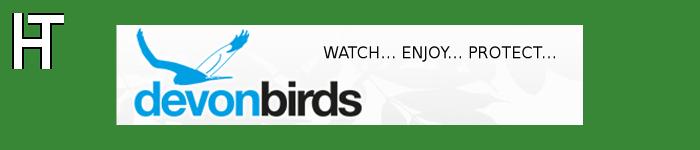 Devon Birds